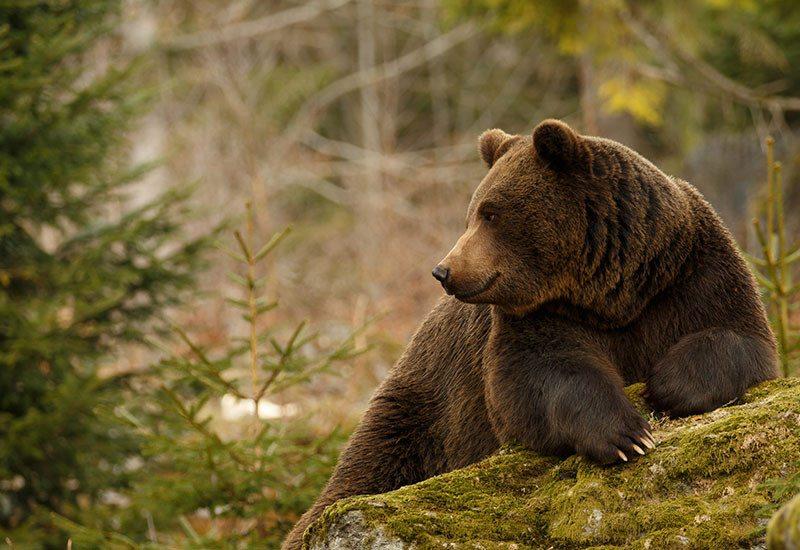 Nolah Mattress partners with Defenders of wildlife