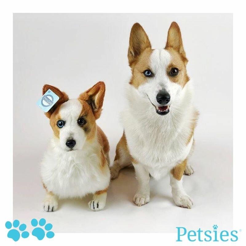 Petsies Plushies