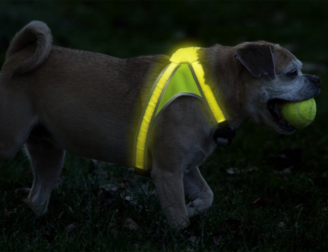 Noxgear LightHound dog vest