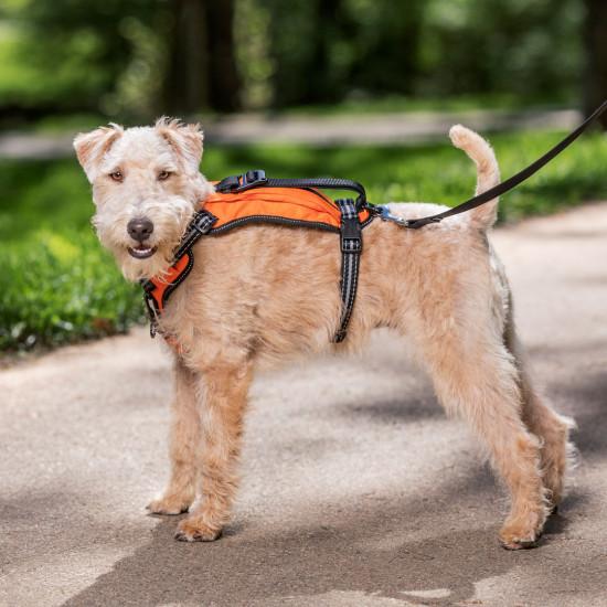 PetSafe Walk-Along Outdoor Dog Harness