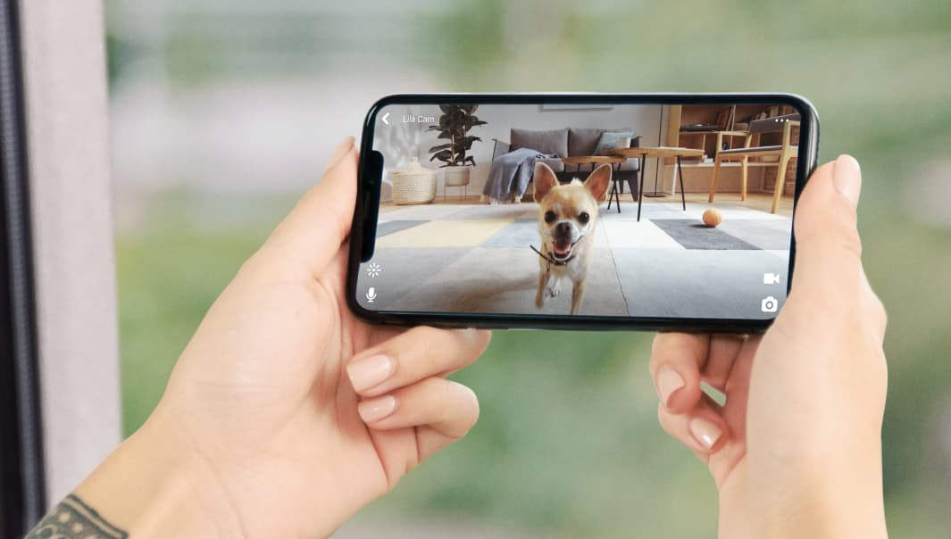 Petcube 2 HD Video Features