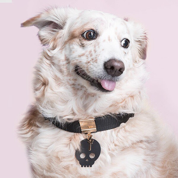 brklz Jewelry for Dogs
