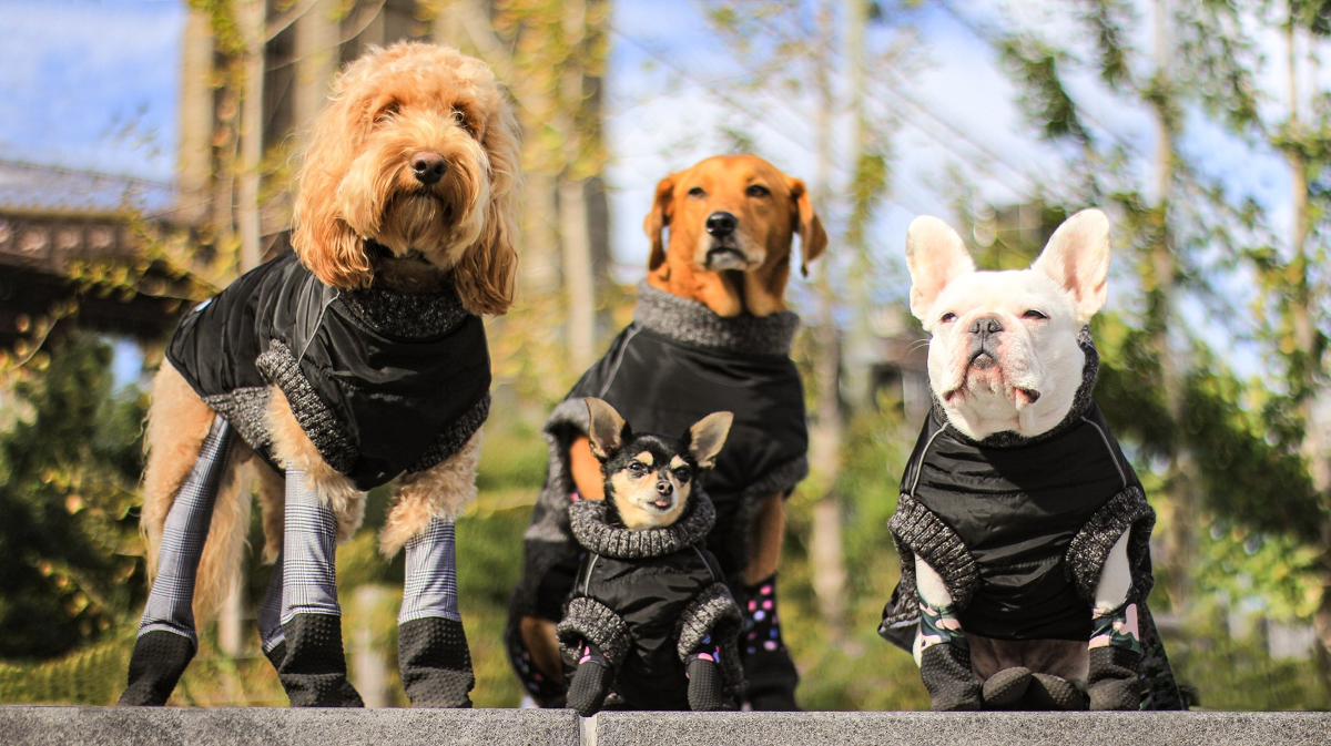Walkee Paws Dog Puffer Coat