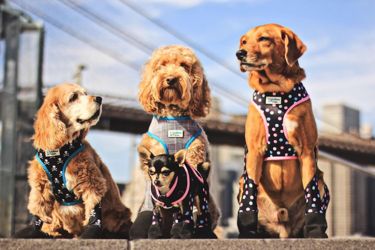Walkee Paws Reversible Dog Harness