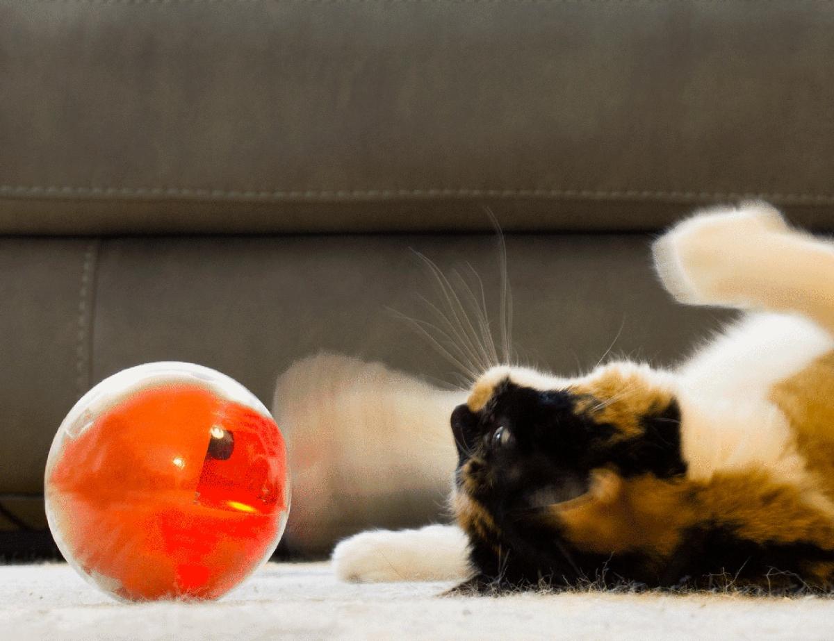 Playdate Pet Smart Ball