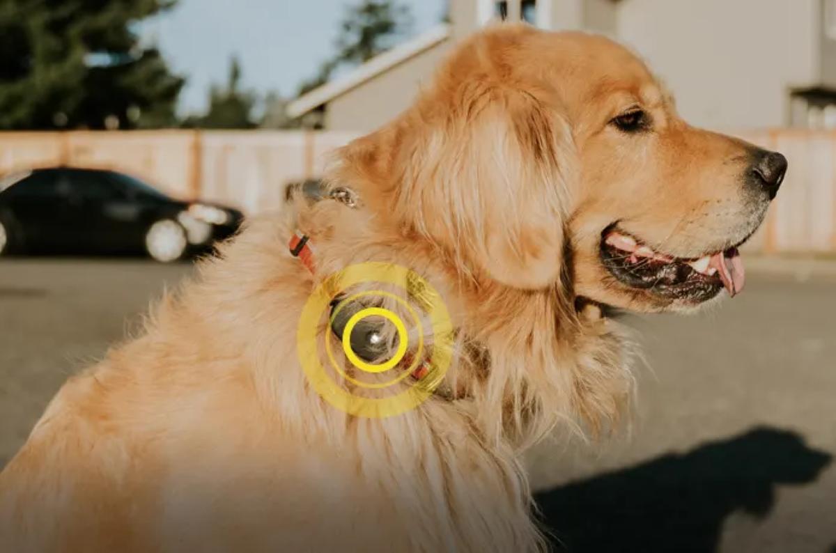 FOUND GPS - Working as a Dog GPS Location Tracker