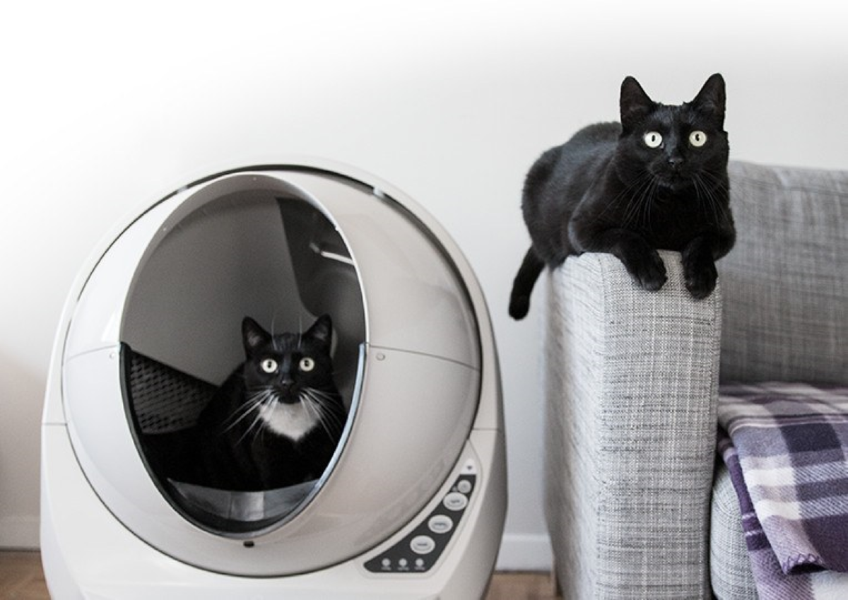 Litter-Robot 3 Connect - Great for Multiple Cats