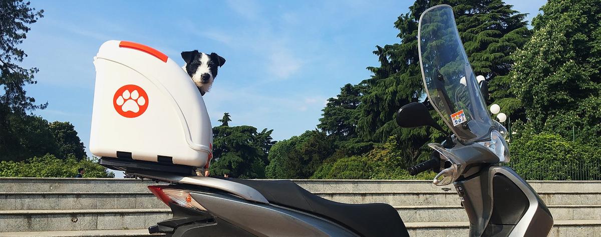 Pet On Wheels Pet Carrier