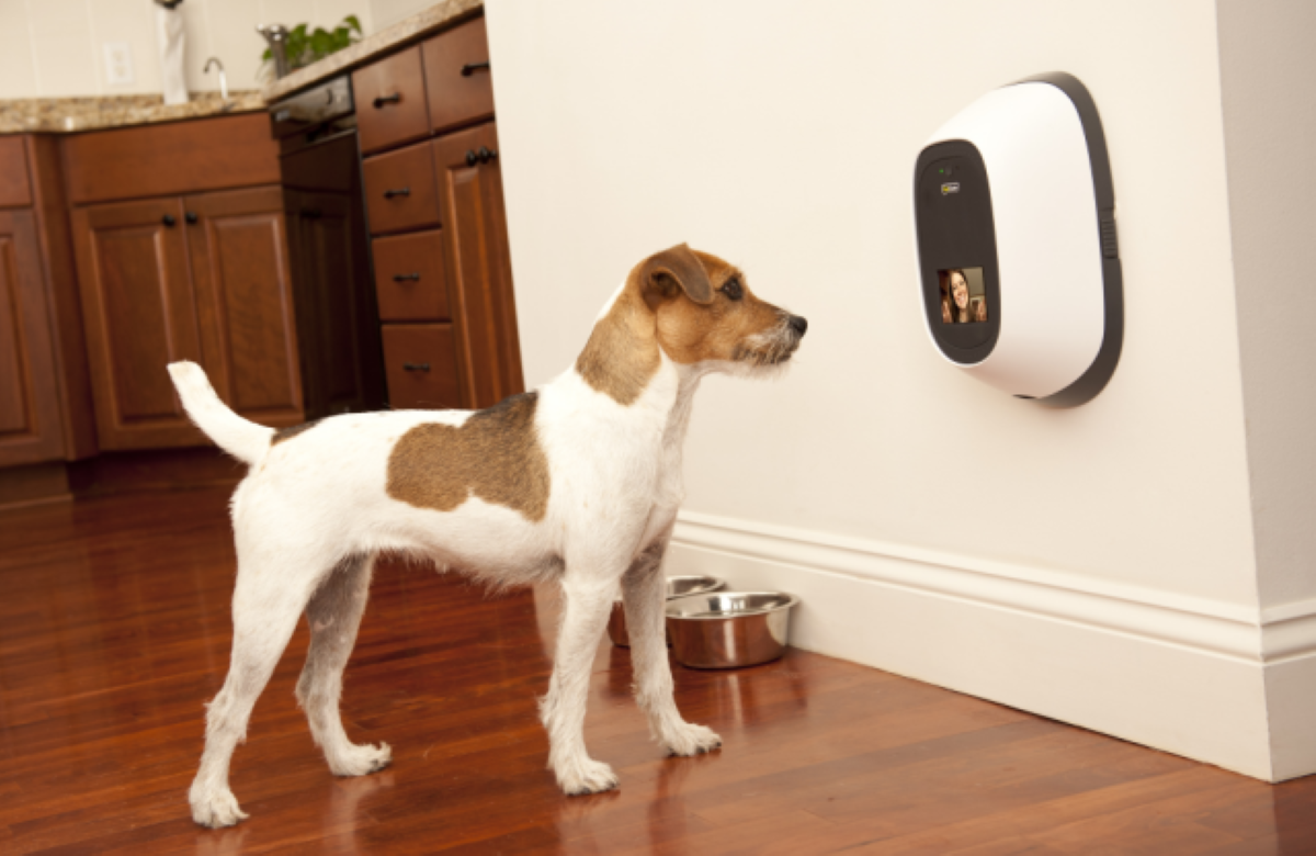 PetChatz HDX Pet Camera & PawCall