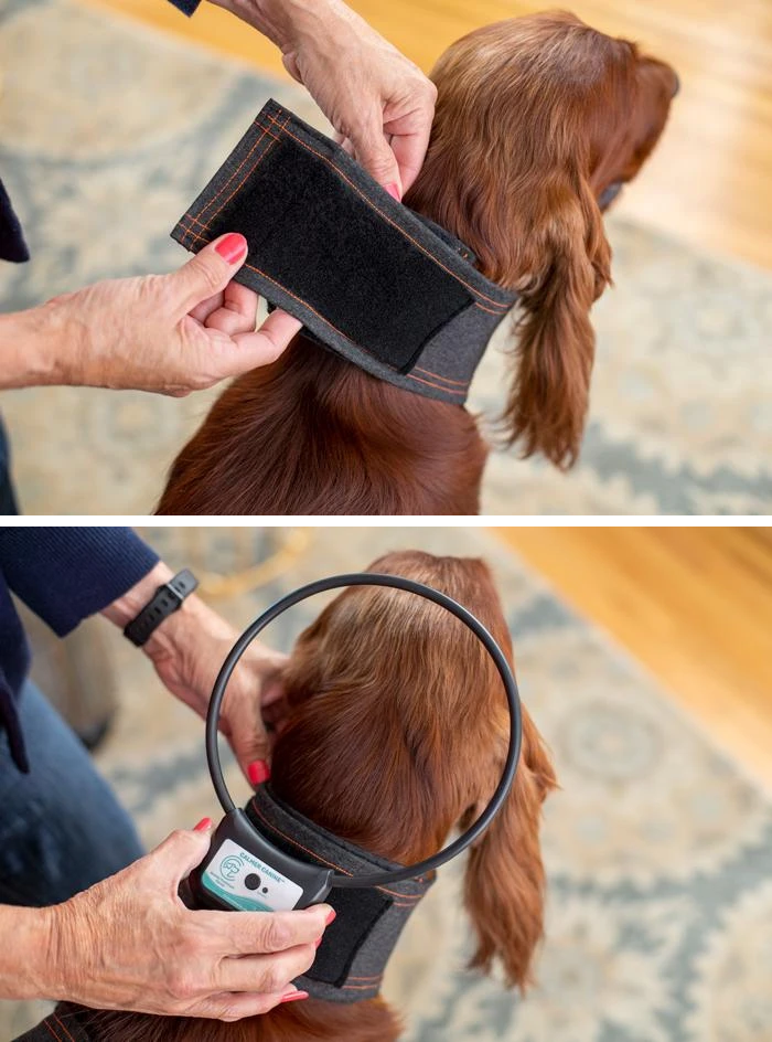 Calmer Canine's Comfortable Dog Vest Placement (2)