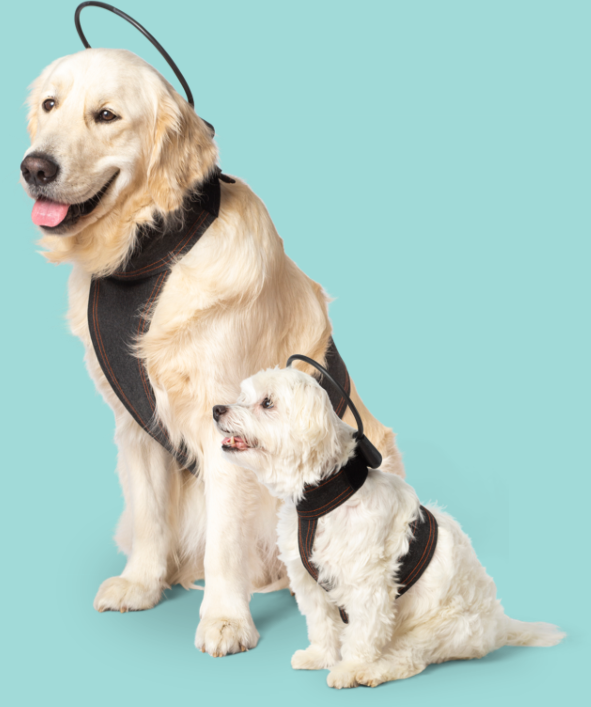 Calmer Canine - 5 Different Dog Vest Size-Models