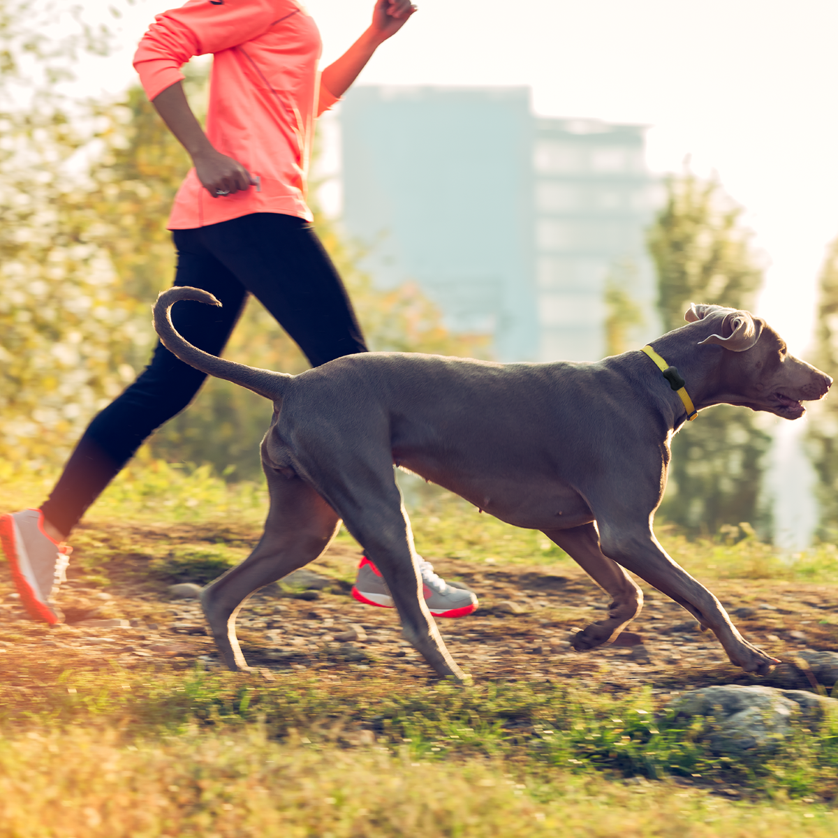 FitBark Dog GPS & Health App - Offers both dog owners and their dogs motivation to stay active and healthy.