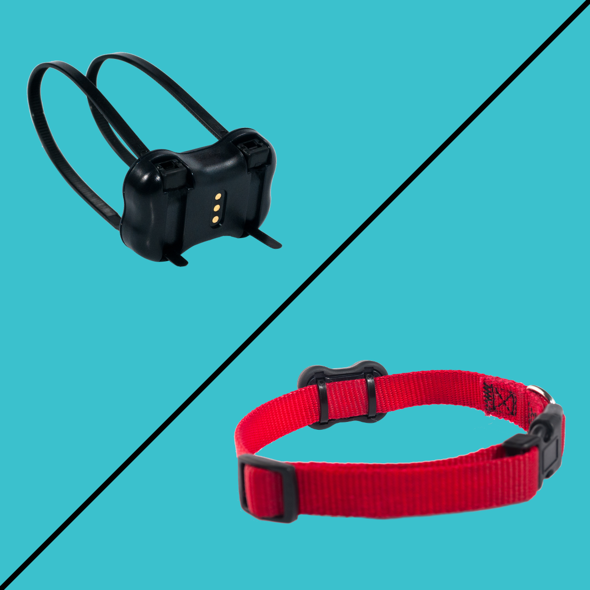Easily attachable to your dog's collars with the help of the included Zip Ties