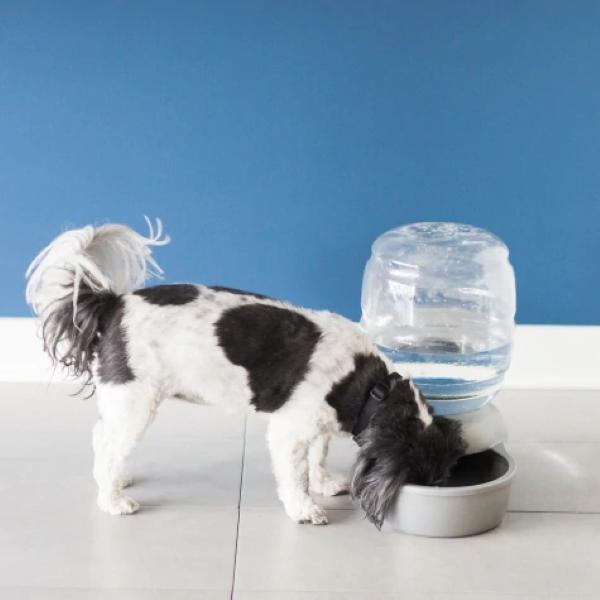 Petmate Replendish Waterer