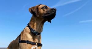 Dogcare Dog Training Collar TC-01