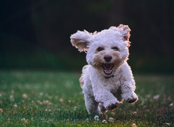 Health Supplements For Your Dog