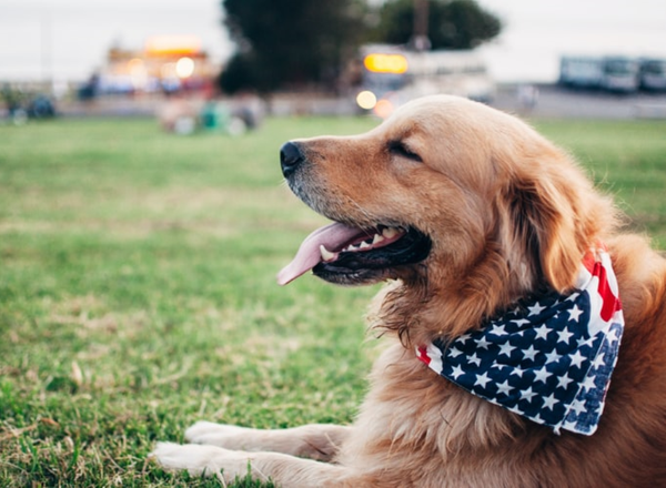 The benefits of using Health Supplements For Your Dog