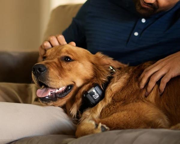 Wagz Freedom Smart Dog Collar